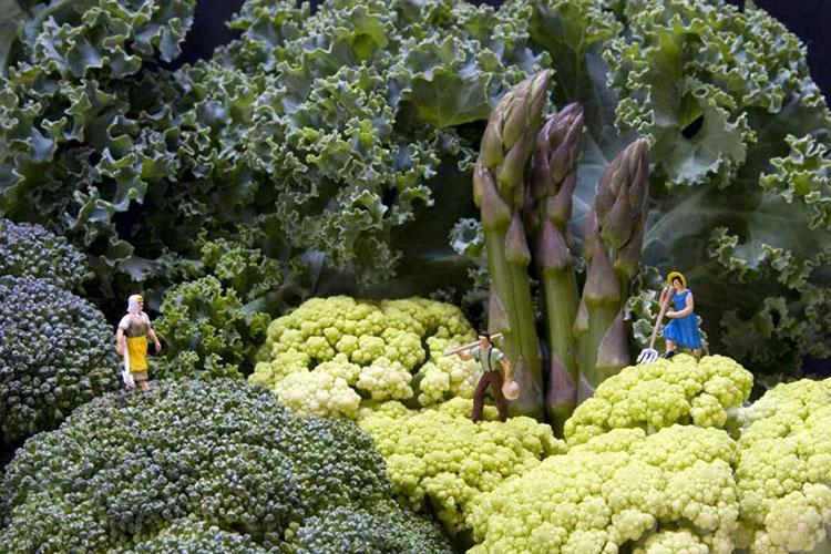 Vegetable Photography Art